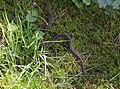 Cikháj - zmije u východního konce obce.jpg