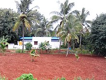 Coconut farm at Kadakola