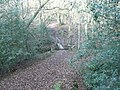 Colgate, Blindman's wood - geograph.org.uk - 646888.jpg