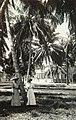 Collectie Nationaal Museum van Wereldculturen TM-60061932 Een park met kokospalmen in San Juan Puerto Rico fotograaf niet bekend.jpg