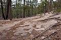 Continental Divide Trail - Flickr - aspidoscelis (47).jpg