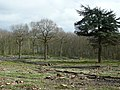 Coppicing in Trenleypark Wood - geograph.org.uk - 740467.jpg