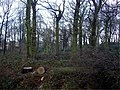 Copse at end of Ormskirk Road, Knowsley Village - geograph.org.uk - 337442.jpg