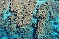 Coral Reef from Above 1.jpg