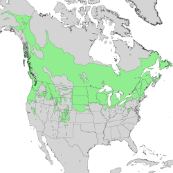 Natural range of subsp. sericea