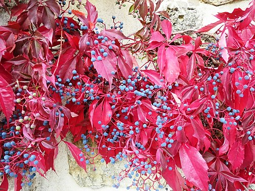 Couleurs d'automne01.jpg
