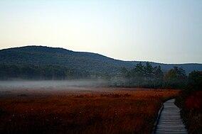 Cranberry-glades-fog-1.jpg
