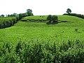 Cranny Townland - geograph.org.uk - 1457942.jpg