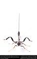 Crown wasp (Stephanidae- Megischus bicolor) (27142881794).jpg