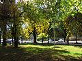 Curico, alameda (13882134875).jpg