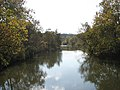 Cuyahoga River, view from CVNP towpath trail.jpg