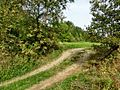 D-NW-Vlotho - Bonstapel - Naturlehrpfad - Vorwaldzone.JPG
