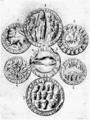 D073 - sceaux de communes - liv3-ch07.png