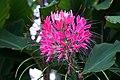 DSC09407 - Niagara Flower (36386174224).jpg