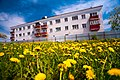 Dandelions at home. Russia. 2014. - panoramio.jpg