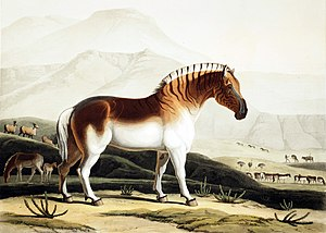 Quagga - 1804 illustration by Samuel Daniell, which was the basis of the supposed subspecies E. q. danielli