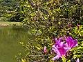 Datun Nature Park 大屯自然公園 - panoramio (2).jpg