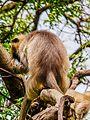 Daulatabad, Aurangabad - panoramio (30).jpg