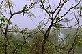 Deer Park Parrot.jpg