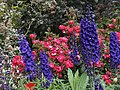 Delphiniums and Friends (48086709111).jpg