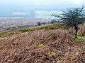 Descent from Bal-Mawr - geograph.org.uk - 704170.jpg