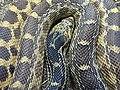 Detail of Snake in Herpetarium - St. Louis Zoo - St. Louis - Missouri - USA (28068330268).jpg