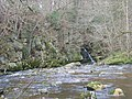 Devil's Water, near Hexham - geograph.org.uk - 124352.jpg