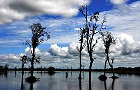 Dibru Saikhuwa National Park.jpg