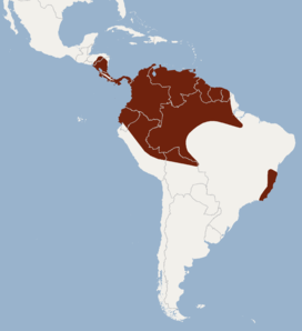 Distribution of Micronycteris hirsuta.png