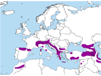 Distribution of Phyrrocorax graculus