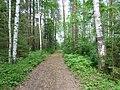 Dobryanskiy r-n, Permskiy kray, Russia - panoramio (245).jpg