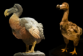Dodo NHM Wien combined PNG.png