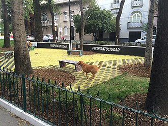 Pocket park - Dog playing in Jardín Edith Sánchez Ramírez pocket park in Mexico City's Colonia Roma neighborhood