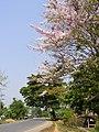 Doi Cham Pi - panoramio - CHAMRAT CHAROENKHET (3).jpg
