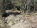 Donard Forest , Newcastle - geograph.org.uk - 1848965.jpg