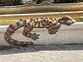 Dragó en la font del parc municipal de l'Eliana 1.jpg