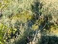 Dragomansko blato 06.JPG