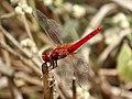 Dragonfly National Park 05.jpg