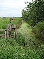 Drain parallel to Branch Road - geograph.org.uk - 821504.jpg