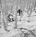 Druivenplukkers aan het werk, Bestanddeelnr 254-4146.jpg