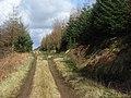 Dundoran Plantation - geograph.org.uk - 353937.jpg