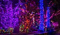 Dyker Lights (62296).jpg