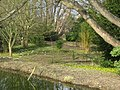 Early signs of spring - geograph.org.uk - 1588375.jpg