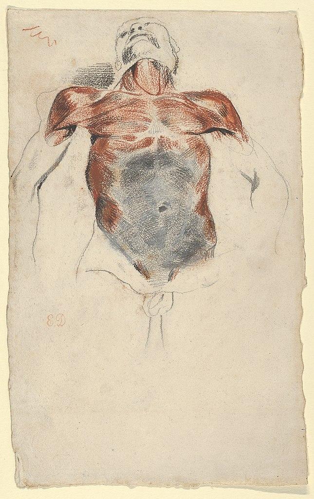 File:Ecorché- Torso of a Male Cadaver MET DP836034.jpg - Wikimedia ...