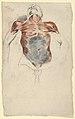Ecorché- Torso of a Male Cadaver MET DP836034.jpg
