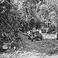 Een gekapte boom wordt met een trekker uit het oerwoud gehaald, Bestanddeelnr 252-4841.jpg