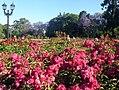 El Rosedal, Palermo, Rosa 'Nur Mahál'.jpg