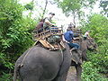 Elephant ride in Chiang Rai Province 2007-05 8.JPG