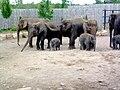 Elephants (160557599).jpg