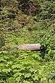 Emerald Lake IMG 5156.JPG